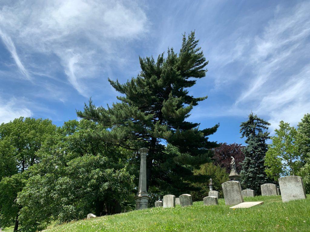 A cedar at Greenwood Cemetery, June 9, 2019. (© FlaglerLive)